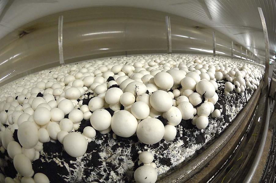 champignons_11.jpg